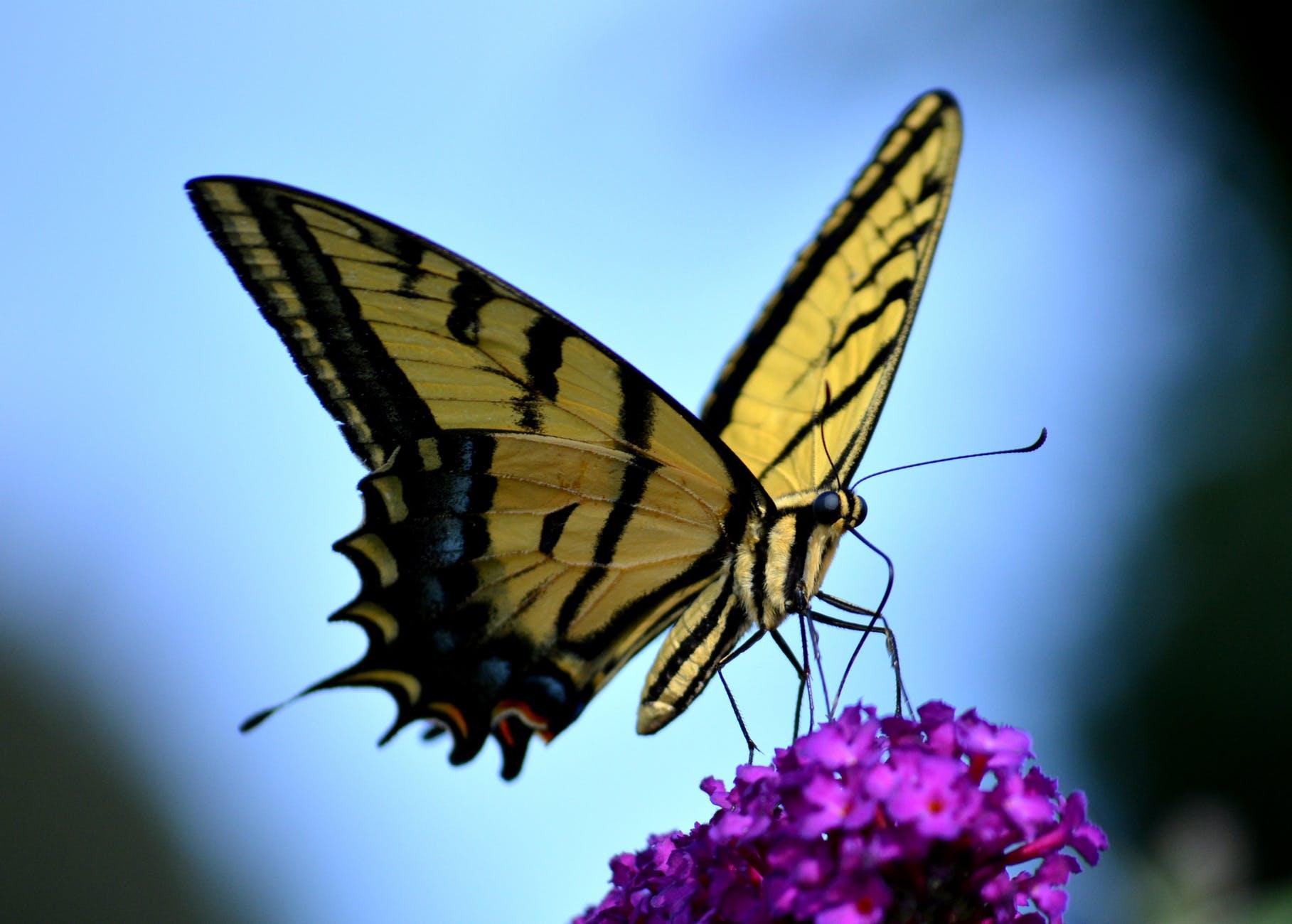 Schmetterlingen Nahrung geben!
